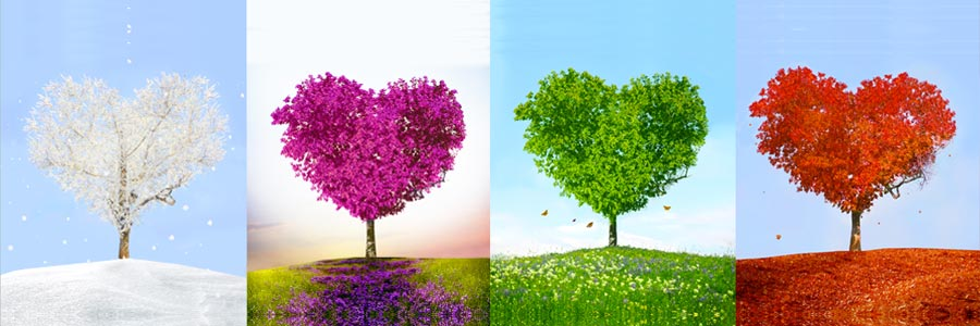 Karina Grant Self Created Health - image of trees transforming through the seasons.